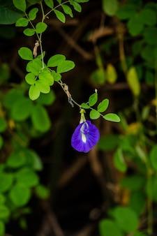 Pois papillon sur arbre