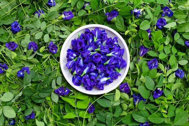 Pois papillon ou fleur de pois bleu. vue de dessus