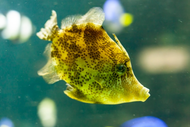 Poisson en aquarium