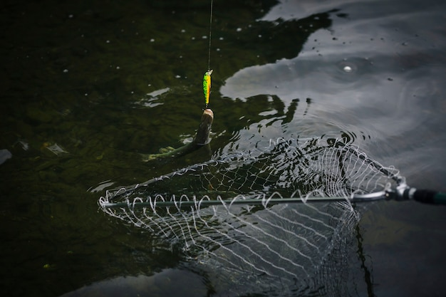 Poisson attaché à un hameçon pris dans un filet de pêche