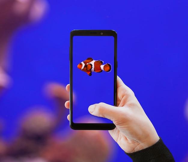 Poisson clown photographié avec un téléphone portable.