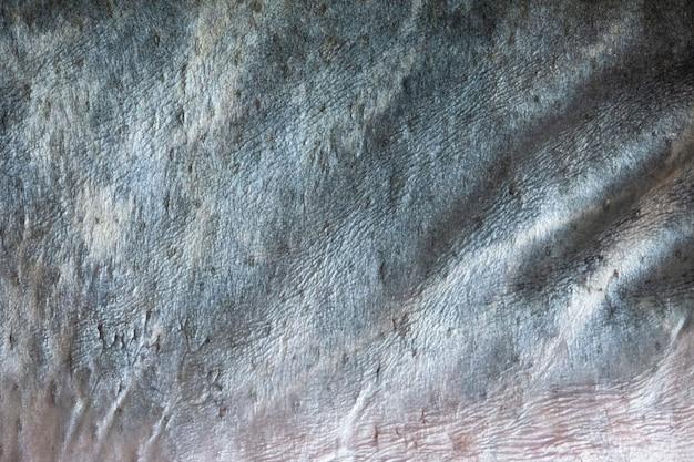 Poisson en cuir macro