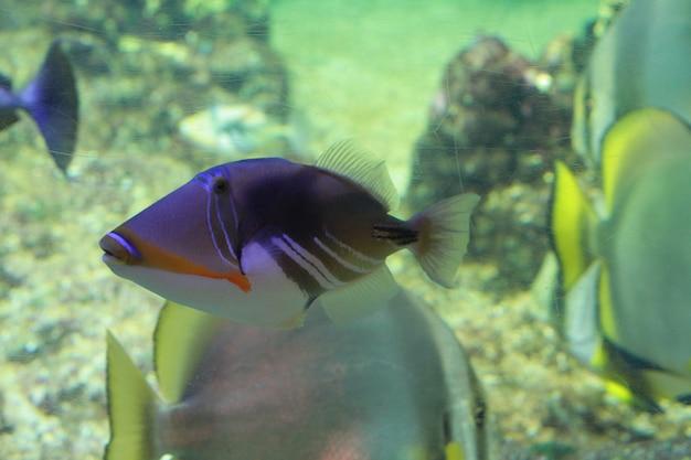 Un poisson dans l'aquarium