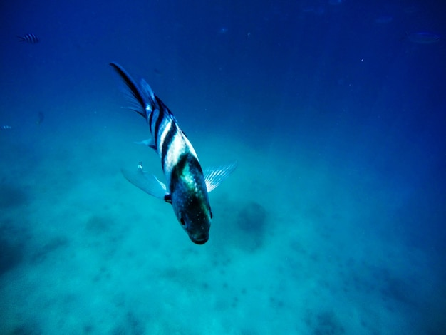 Poisson dans la mer