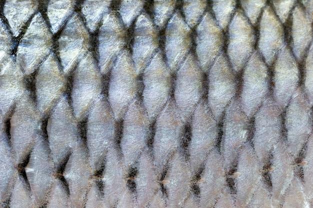 Poisson écailles texture