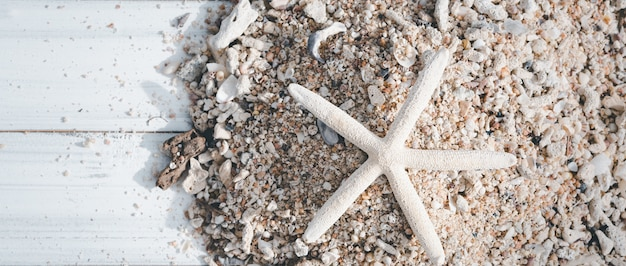Poisson étoile, récif et coquille de mer sur bois blanc, fond d'été