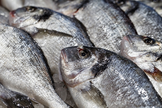 Poisson frais cru en gros plan rapproché en vrac sur la glace au marché aux poissons