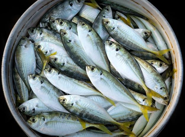 Poisson frais de la mer pour se nourrir.