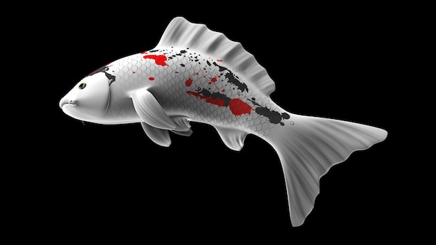 Poisson koi de rendu 3d coloré avec des motifs de couleur blanc-noir et rouge et une vue latérale