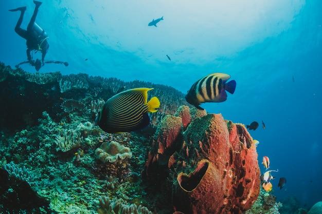 Poisson de mer et plongeur