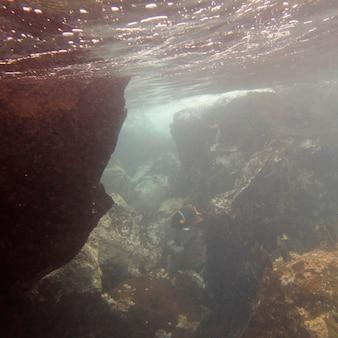 Poisson nageant sous l'eau, baie gardner, île d'espanola, îles galapagos, équateur