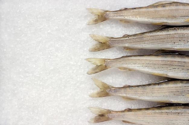 Poisson de rivière sibérienne grisonnant sur gros cristaux de sel blanc