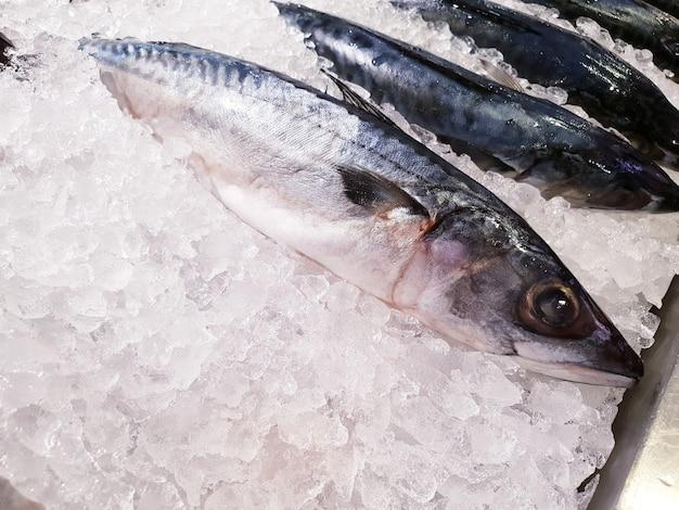 Poisson saba congelé dans la glace au supermarché