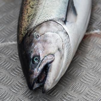 Poisson saumon, district régional de skeena-queen charlotte, île hippa, haida gwaii, île graham, bri