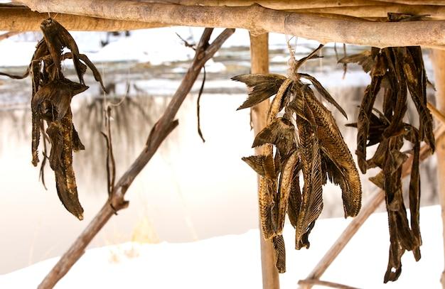 Poisson séché des aborigènes du kamchatka