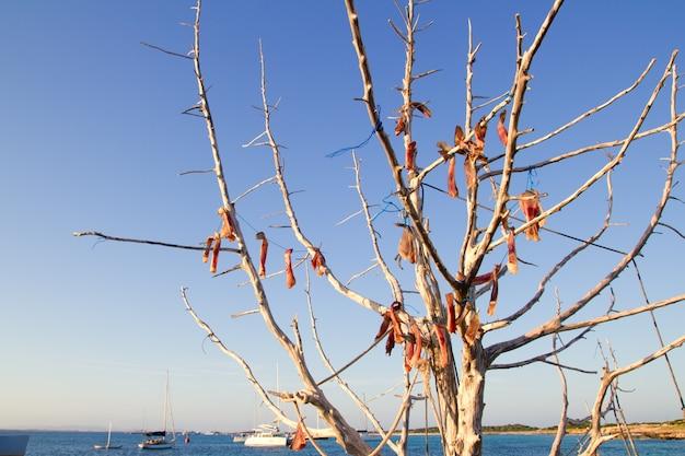 Poisson séché à l'air dans un arbre en plein air méditerranéen