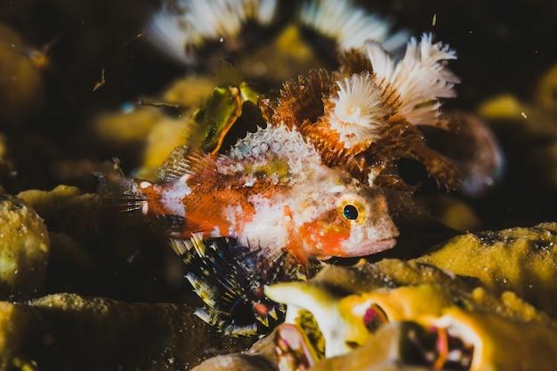 Poisson spécial en mer tropicale