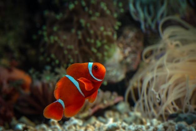 Poissons marins aux belles couleurs