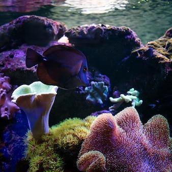 Les poissons tropicaux nagent près des récifs coralliens. la vie sous-marine.