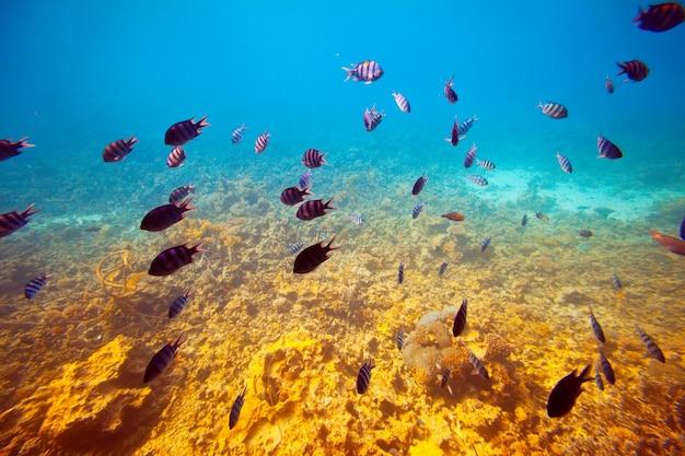 Poissons sur la zone de récifs coralliens