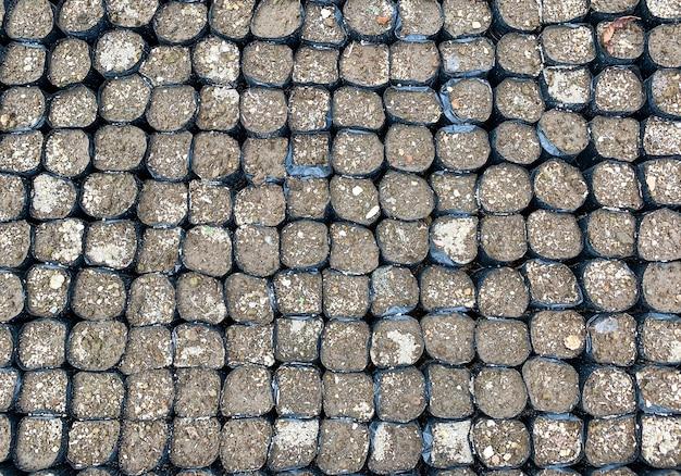 Polybags contenant de la terre et prêts à être plantés en pépinière