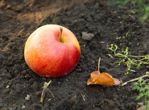 Pomme jaune rouge sur le sol d'en haut