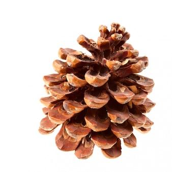 Pomme de pin brun sec