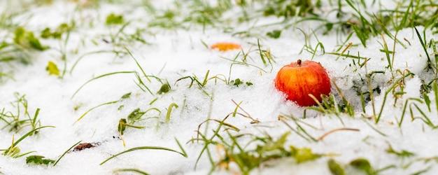 Pomme rouge dans la neige parmi l'herbe verte enneigée