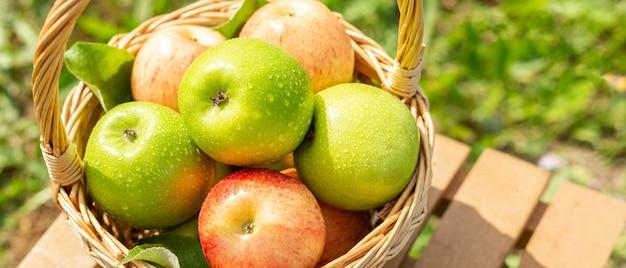 Pomme verte dans le panier en osier sur la table en bois herbe verte dans le jardin temps de récolte style rustique