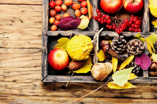 Pommes et citrouilles d'automne