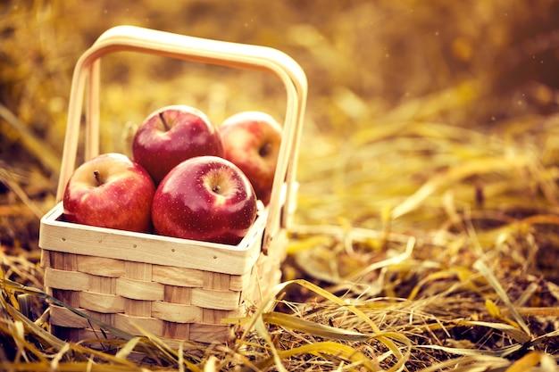 Pommes fraîches et savoureuses au panier en bois sur fond d'automne rouge