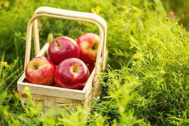Pommes fraîches et savoureuses au panier en bois sur herbe verte