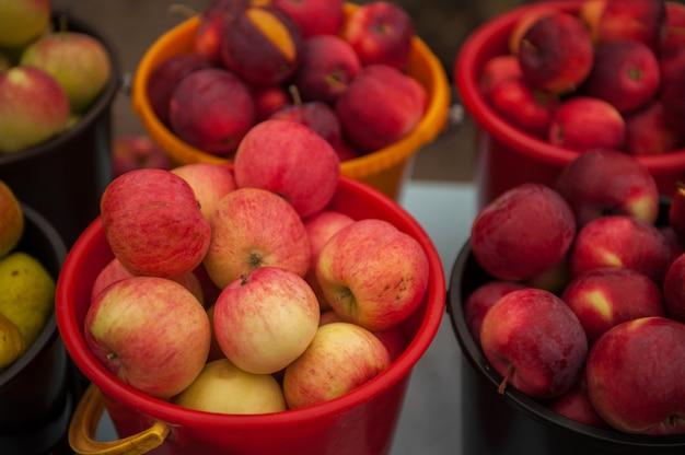 Pommes mûres rouges dans un seau.