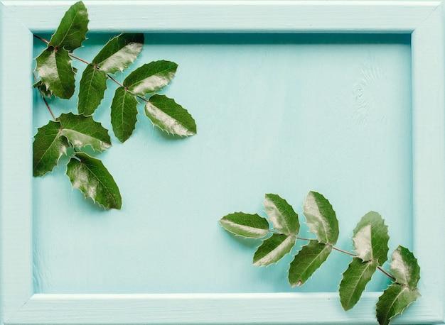 Pommes de pin et feuilles de mahonia sur un bois bleu