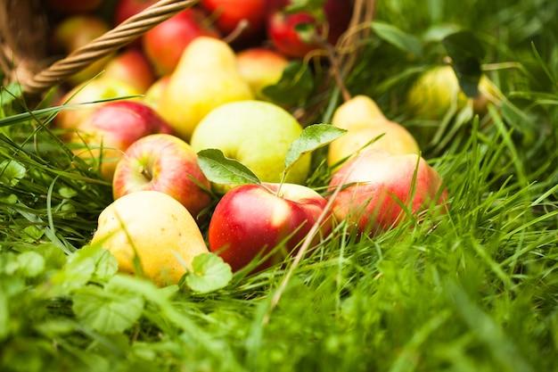 Pommes et poires dispersées du panier sur une herbe dans le jardin