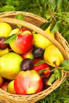 Pommes et poires et prunes dans le panier sur une herbe
