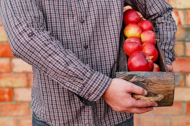Pommes rouges biologiques mûres fraîches dans une boîte en bois dans les mains masculines récolte d'automne de pommes rouges pour l'alimentation