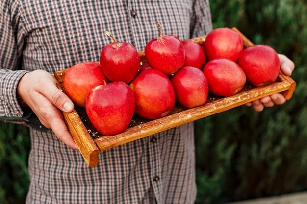 Pommes rouges biologiques mûres fraîches dans une boîte en bois entre les mains des hommes.