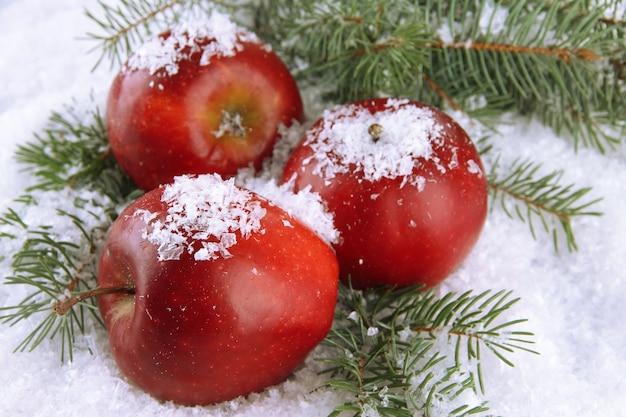 Pommes rouges avec des branches de sapin dans la neige se bouchent