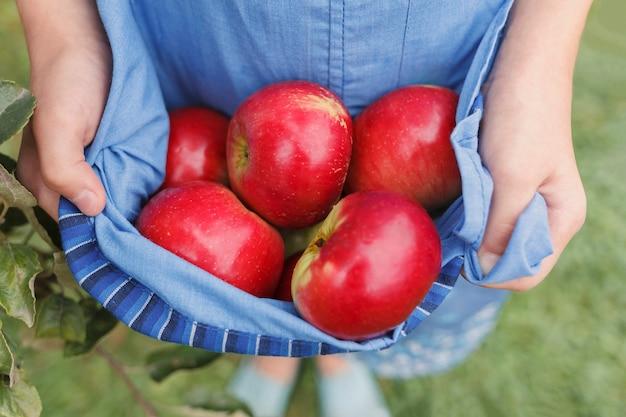 Pommes rouges dans un tablier tenu par les mains d'une petite fille