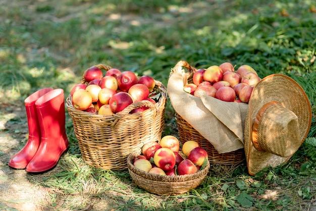 Pommes rouges mûres dans un panier sur l'herbe verte