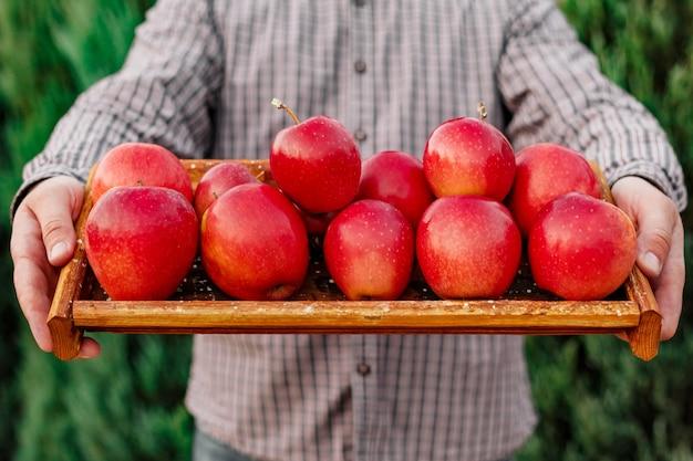 Pommes rouges mûres fraîches en boîte dans les mains des hommes pommes rouges crues récolte d'automne