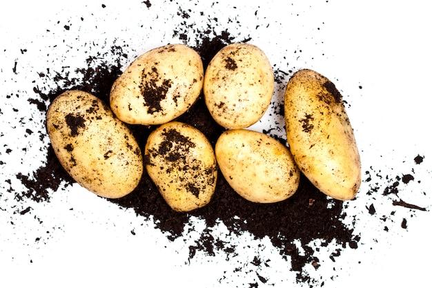 Pommes de terre biologiques fraîches et sol isolé sur blanc