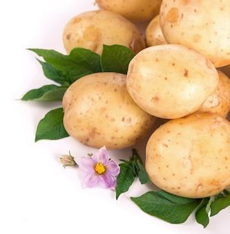 Pommes de terre crues avec des fleurs et des feuilles isolées sur une surface blanche