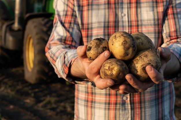 Pommes de terre entre les mains d'un agriculteur
