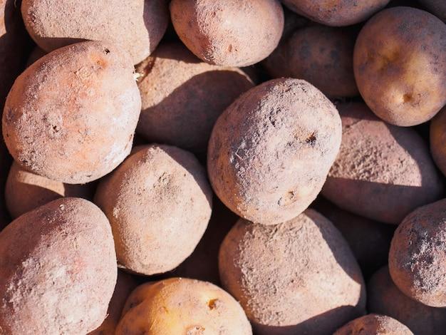 Pommes de terre de printemps.