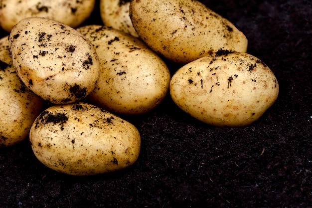 Pommes de terre récoltées closeup sol