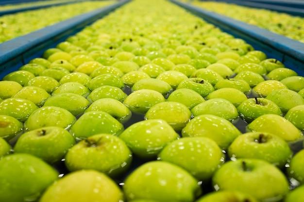 Pommes vertes dans le réservoir du convoyeur d'eau dans l'usine de transformation de fruits.