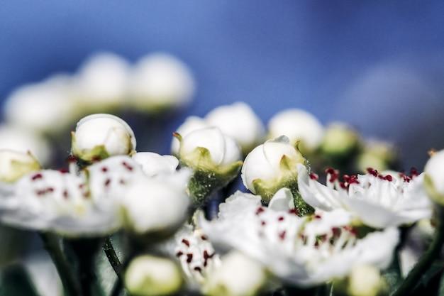 Pommiers en fleurs au printemps fond de printemps fond saisonnier floral naturel