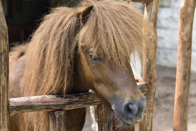 Poney brun avec des cheveux drôles